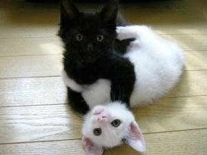 preto-e-branco1